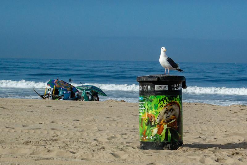 Venice Beach-Sentinal.jpg