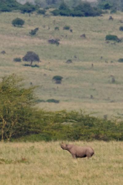 Kenya.Card1.02.2014 588