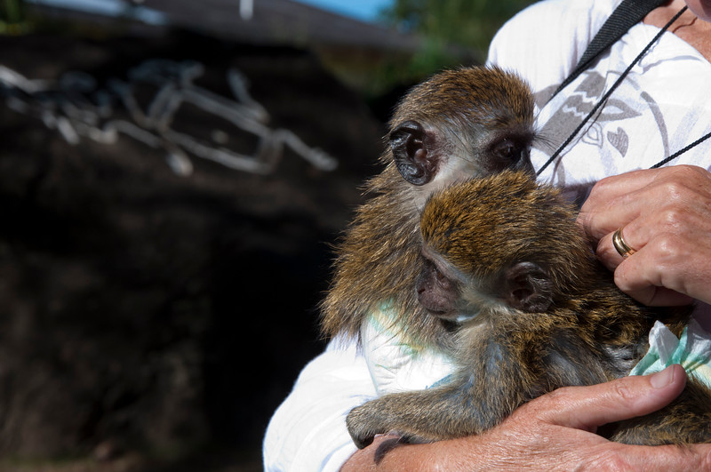 We took a tour of the island with Kenny.  Here we stopped to see baby monkeys.