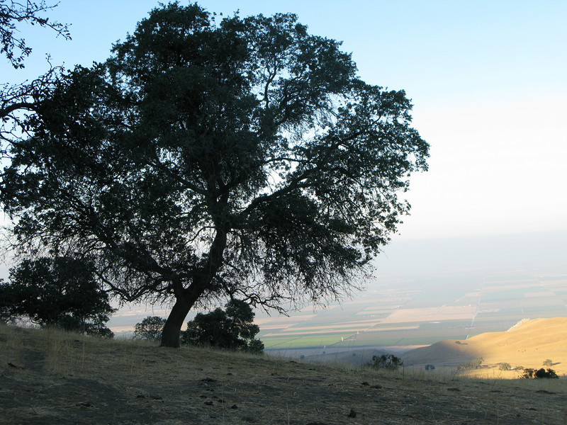 tree and valley