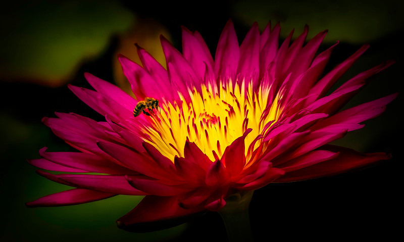 Lily and Honey Bee - 16.jpg
