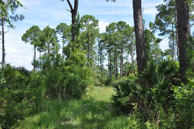 Cedar Key Scrub State Reserve is a wilderness preserve located six miles east of Cedar Key and provides miles of trails for hiking or biking through swamps, old stand forests and wilderness scrub.