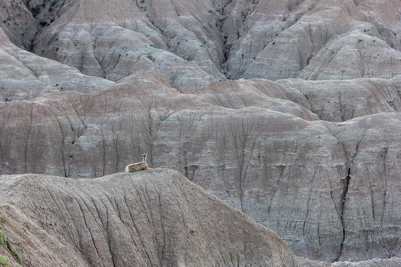 Sheep View-7950.jpg