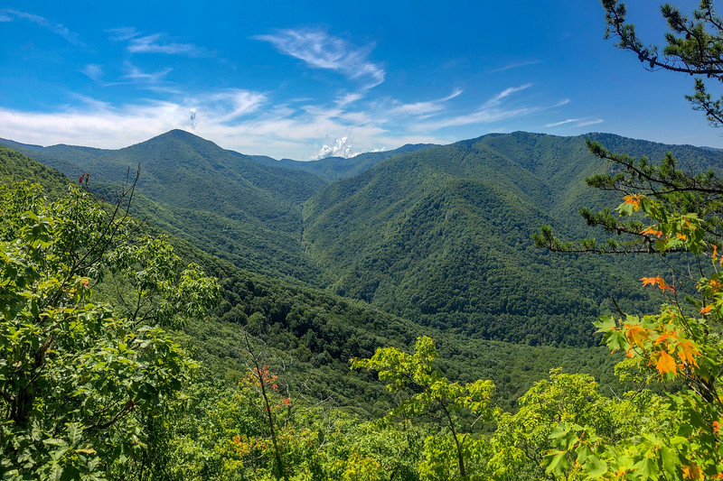 Fork Mountain Trail via Black Balsam Knob  (9.8 miles; d=11.30)