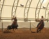2011 Olds Poker Roping : 2 galleries with 197 photos
