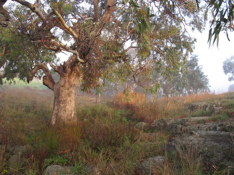 Lollipop Creek Wyndhamvale 2.JPG