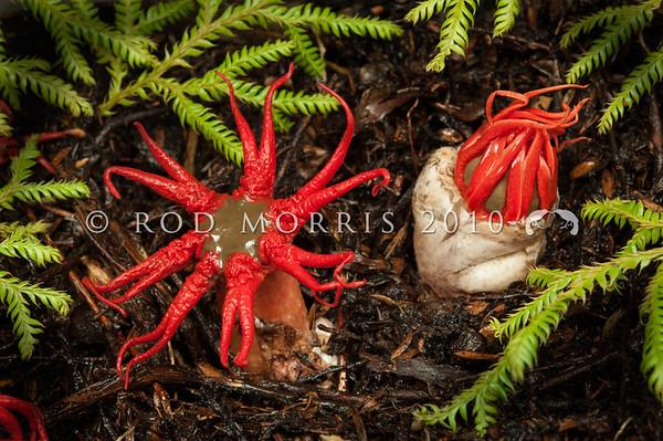 Fungi and Lichen Photography