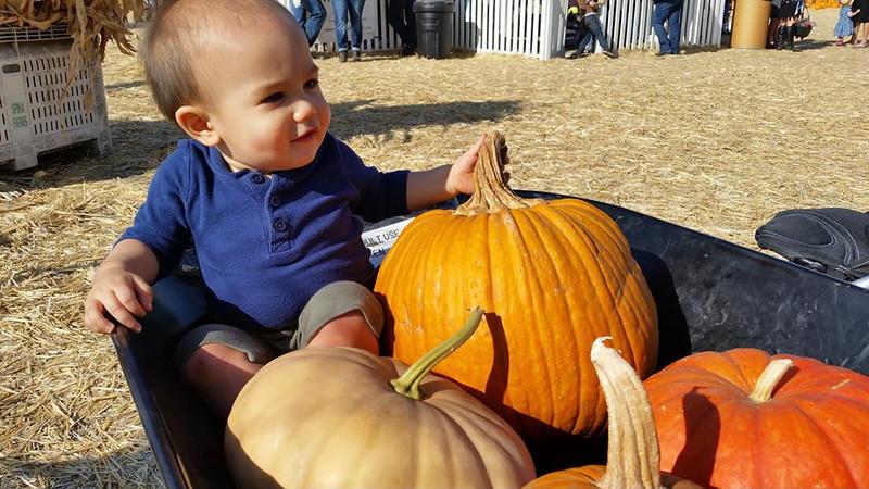 OlliePumpkins16_20151017.jpg