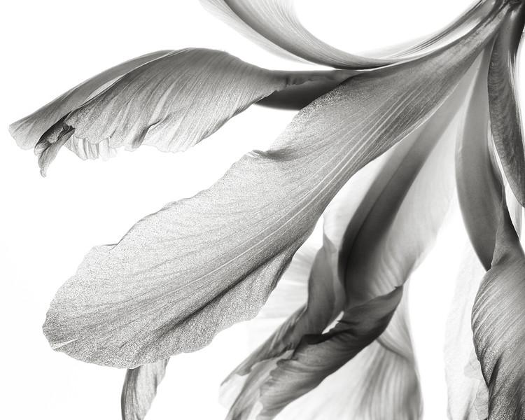 pale-iris-02.jpg