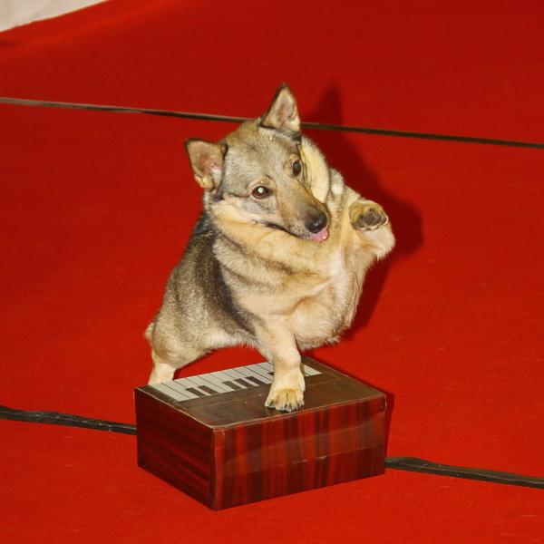 KC Delft Dog Dance 2013