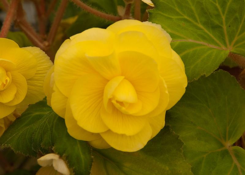 2009 09 06_White Flower Farm_0137_edited-1.jpg