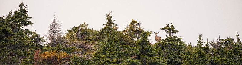 Coast Mountain Range, British Columbia, Canada.
