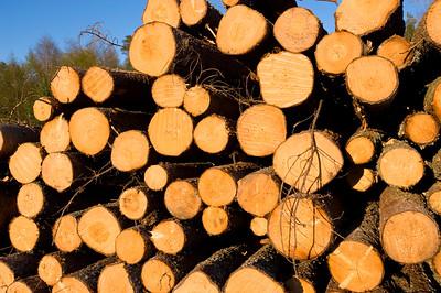 Pile of logs, Turunmaa Archipelago, Baltic Sea, Finland