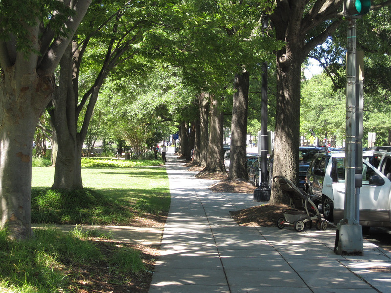 Line of sunning trees, Virginia Avenue, Washington, D.C.