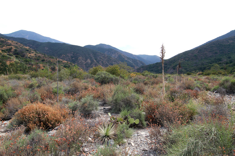 32633-Trabuco-Canyon-Rd-Mitchell-East-Trabuco-Canyon_51.JPG
