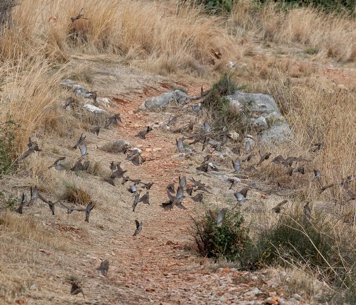 Flock of Birds taking off in panic - Kas, Antalya Province, Turkey, Asia
