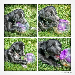 Puppy Favorites 2015