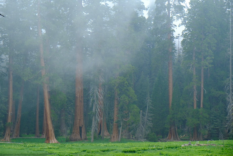 California Day 6 Sequoia 05-30-2017 96.JPG