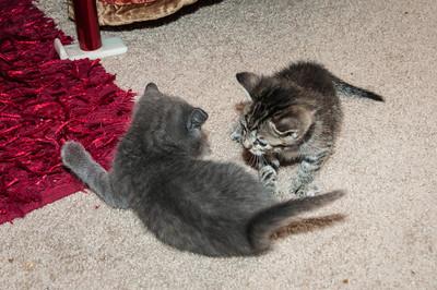 Kittens - October 2013