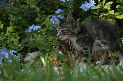 Kitties in Austin October 05