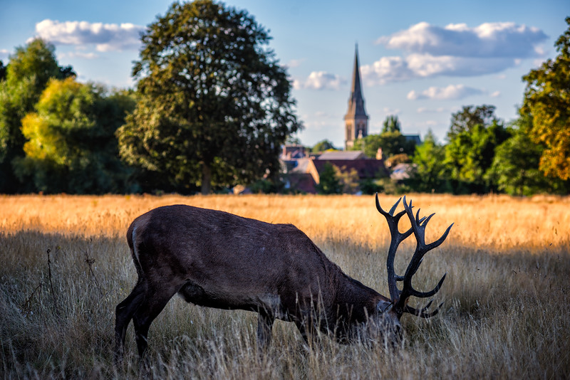 Deer-and-church.jpg