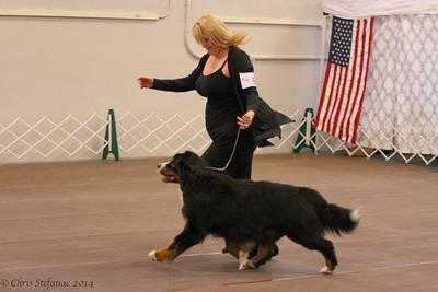 Sweeps 9-11 yr Veteran Dogs