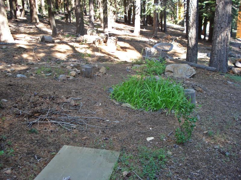06-06-2015 First Watering Backyard Project (4).JPG