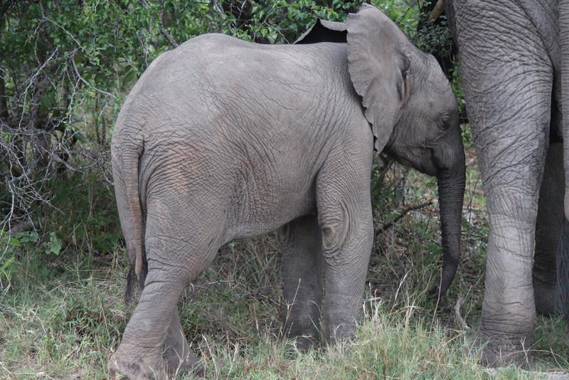 Africa Trip 2012 355.jpg