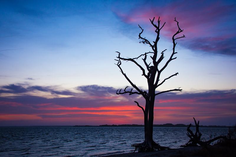 Sunset-Tree-85.jpg