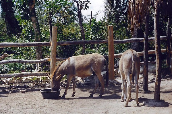 1999 Dominican Republic mar 24
