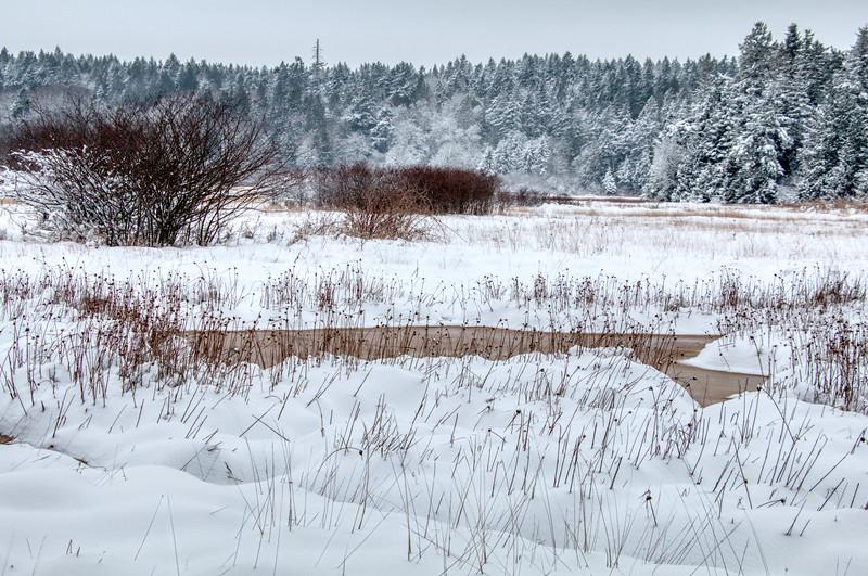 Island View Salt Marsh in Winter