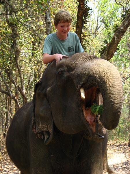 Elephant - always thrilling