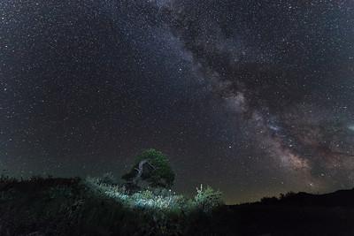"""Star Pine"" (photography) by Kristopher Schoenleber"