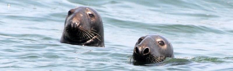 bird,seal,family 051.JPG