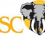 dsc-opens-online-auction
