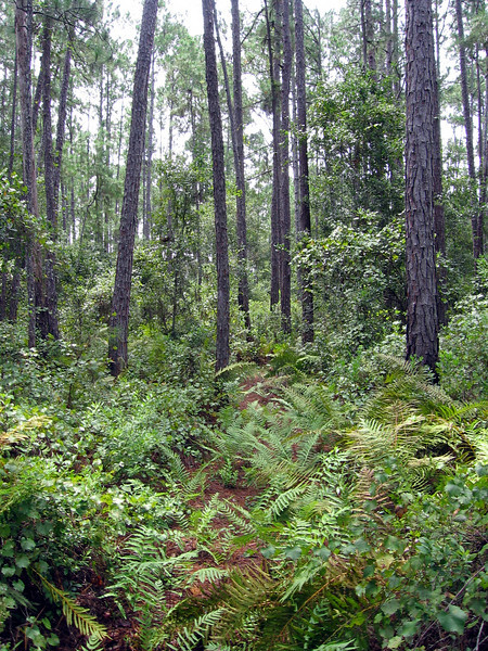 Richloam Tract, Withlacoochee State Forest