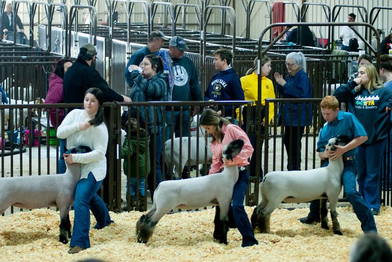 kay_county_showdown_sheep_20191207-77.jpg