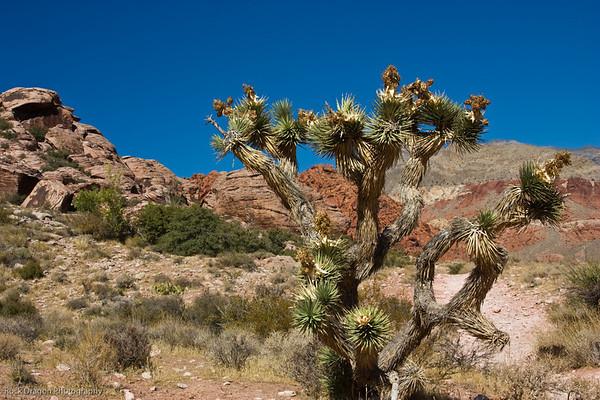 Redrock Canyon Nevada