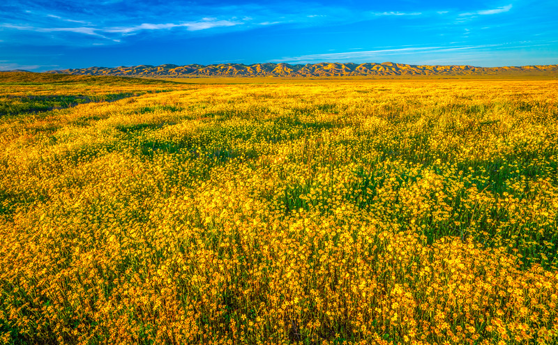 Carrizo Plain National Monument Wildflowers Superbloom Spring Symphony #9!  Elliot McGucken Fine Art Landscape Nature Photography Prints & Luxury Wall Art