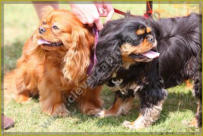 Happy Dog Show Clapham - Images