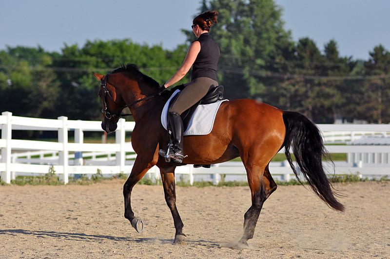 Horses July 2011 398a.jpg