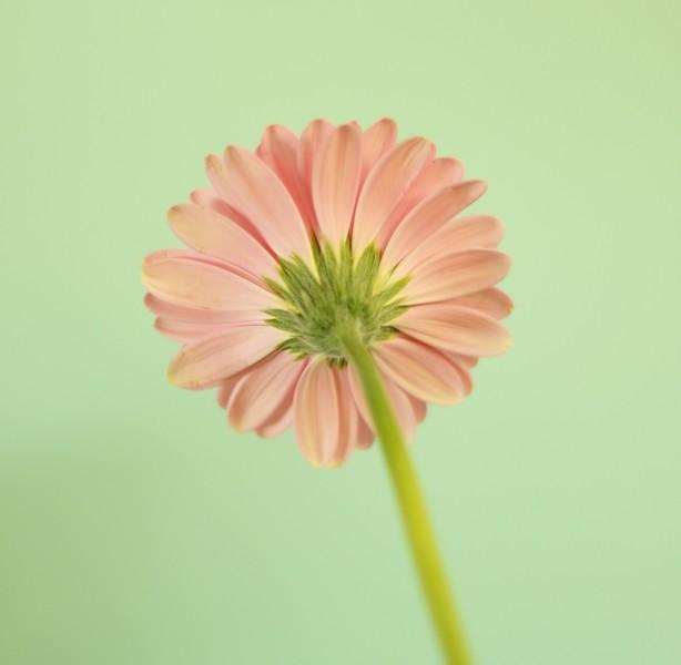 flowers in gel 013c.jpg..jpg