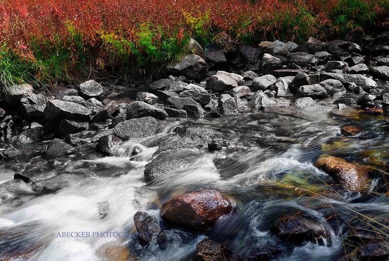 Color on River.jpg
