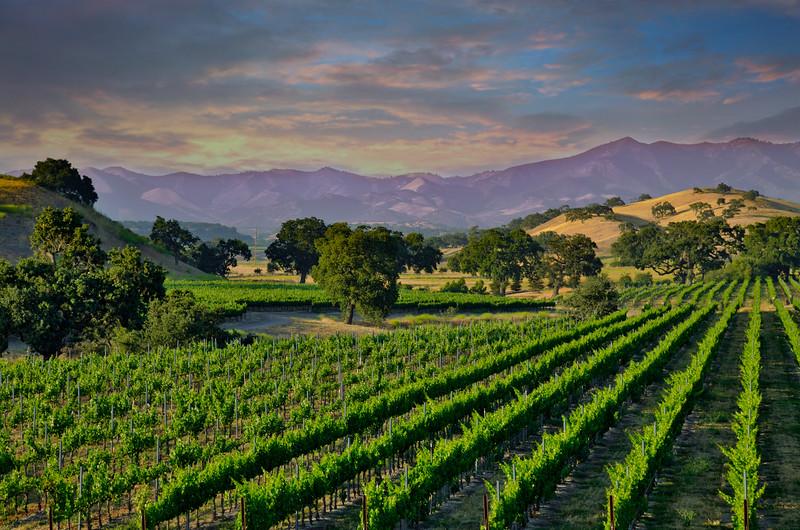 Santa Ynez Valley 1