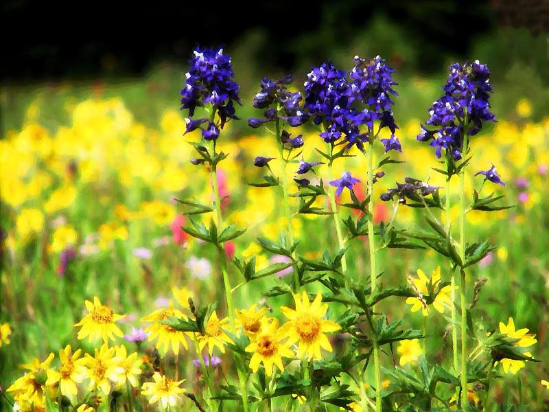 amh FLOWERS (1380).jpg