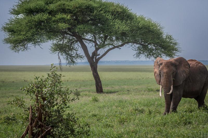 1802_Tanzania040.jpg