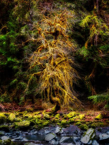 Fairy-tale Tree