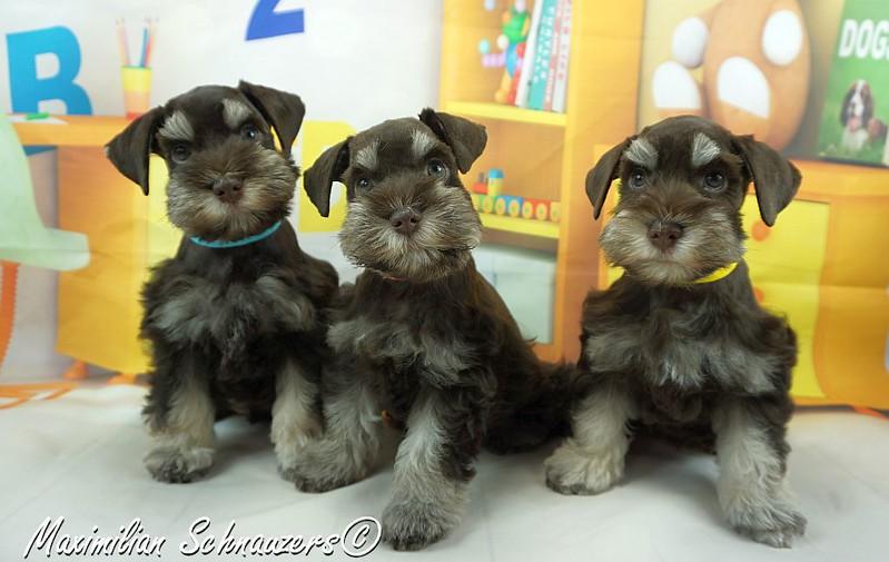 Amy Pups 001.jpg
