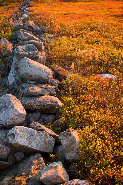 Rock Wall in Blueberry Bog