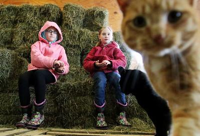 20160122 - Barn Cats (MA)